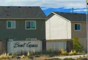 bent-grass